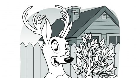 Hidden Pictures Deer Gardener