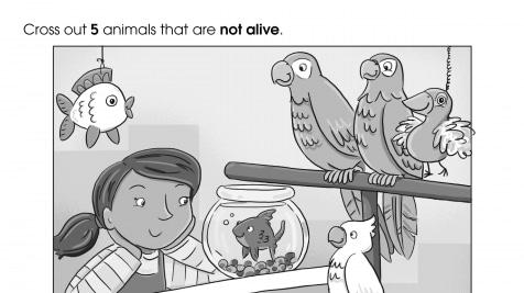 Which Animals are Toy Animals?