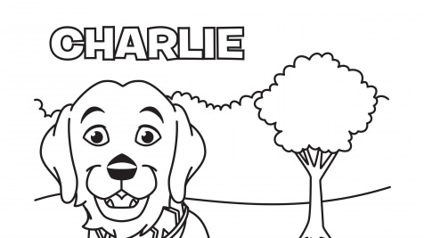 Color Charlie
