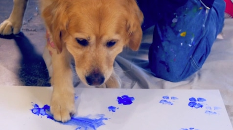 Paw Painting