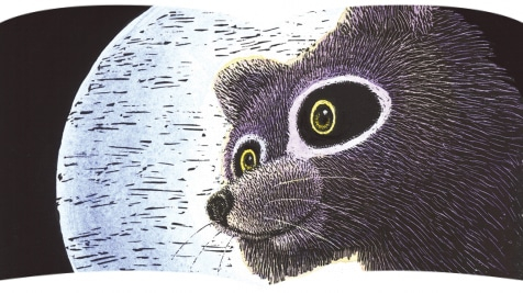 Raccoon on the Moon